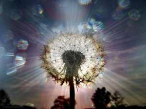 energy-seeds-of-light